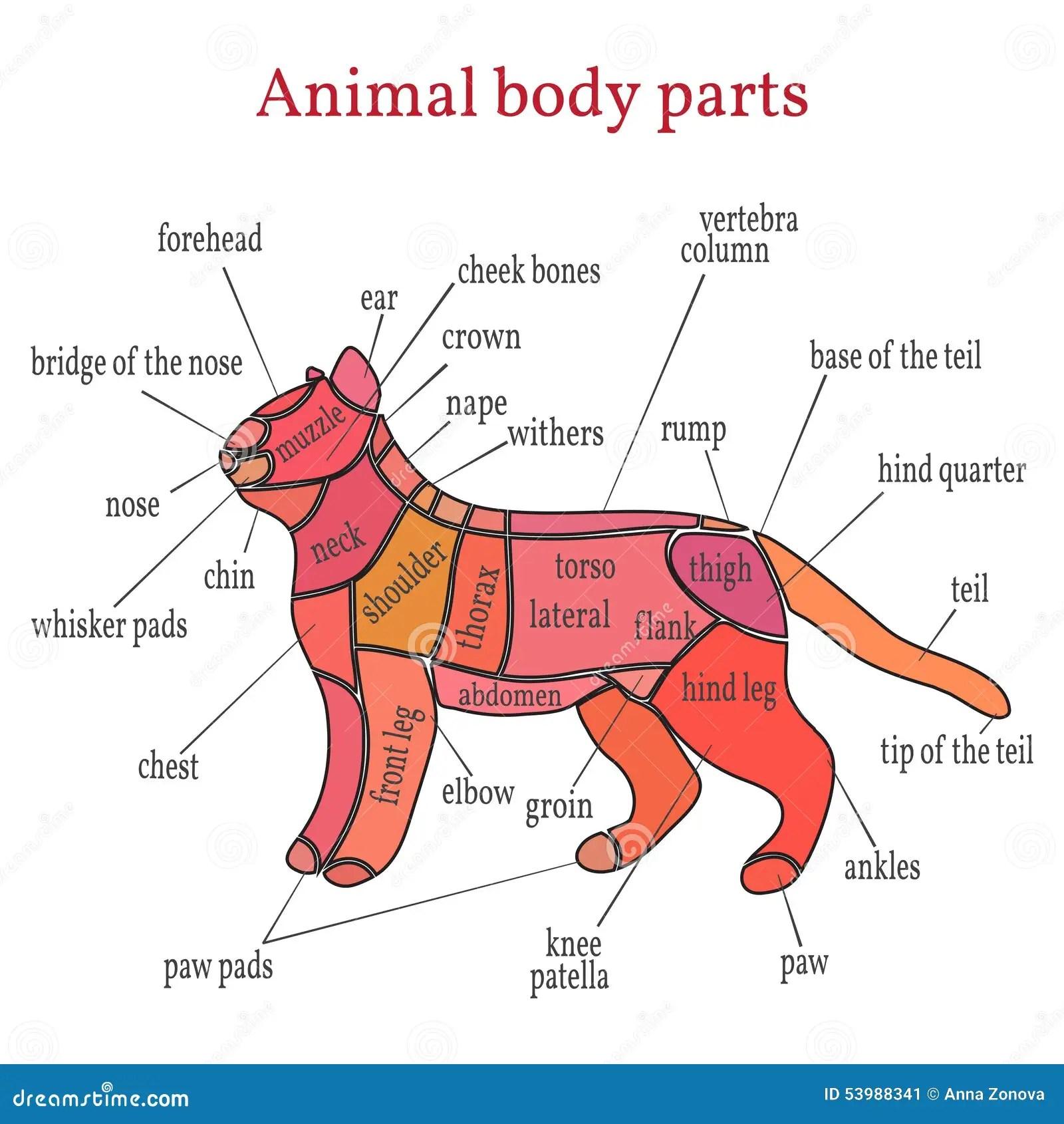 Rlijke Lichaamsdelen Vector Illustratie Illustratie