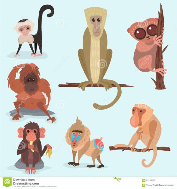 Different Breads Monkey Character Animal Wild Zoo Ape