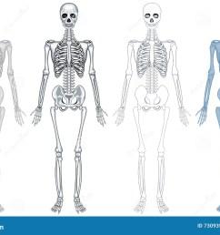 different diagram of human skeleton [ 1300 x 939 Pixel ]