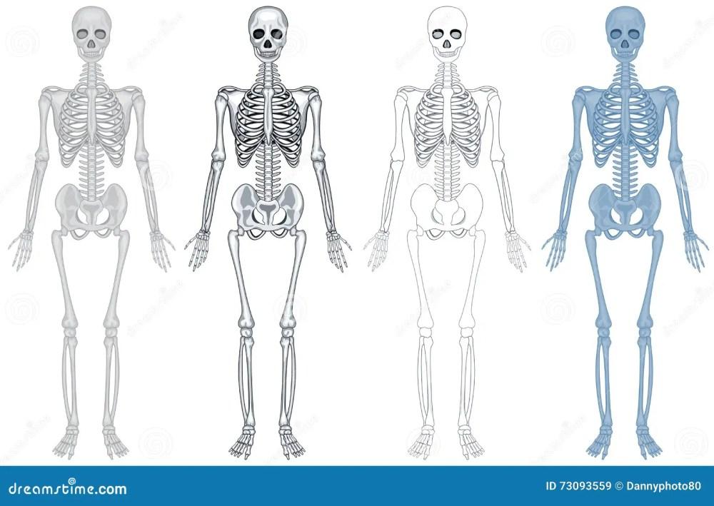 medium resolution of different diagram of human skeleton