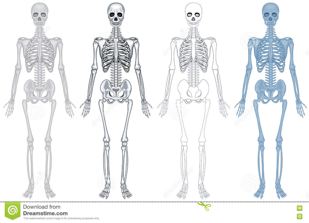 hight resolution of different diagram of human skeleton