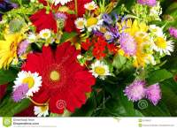 Different And Fresh Bunch Of Garden Flowers Stock Image ...