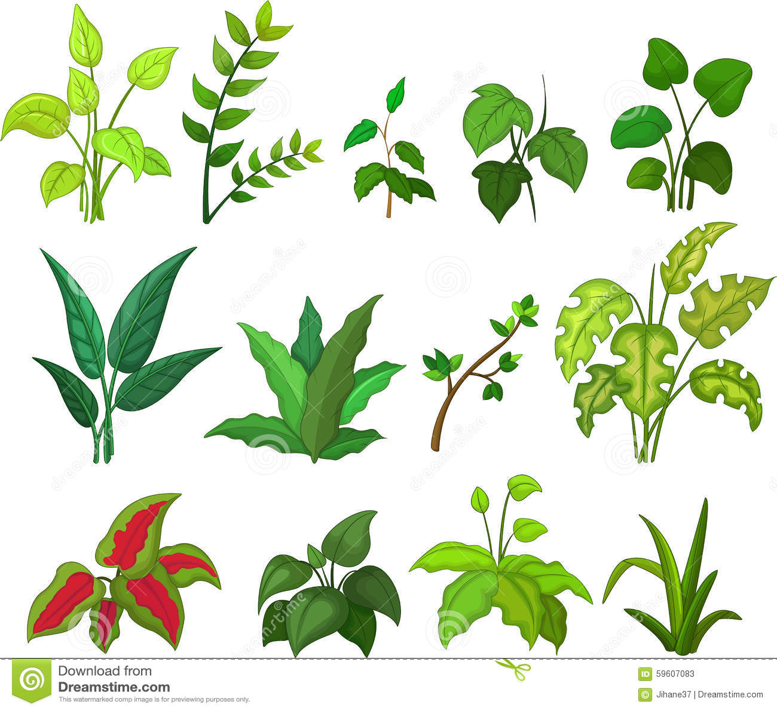 Different Kind Of Plants Stock Illustration Illustration