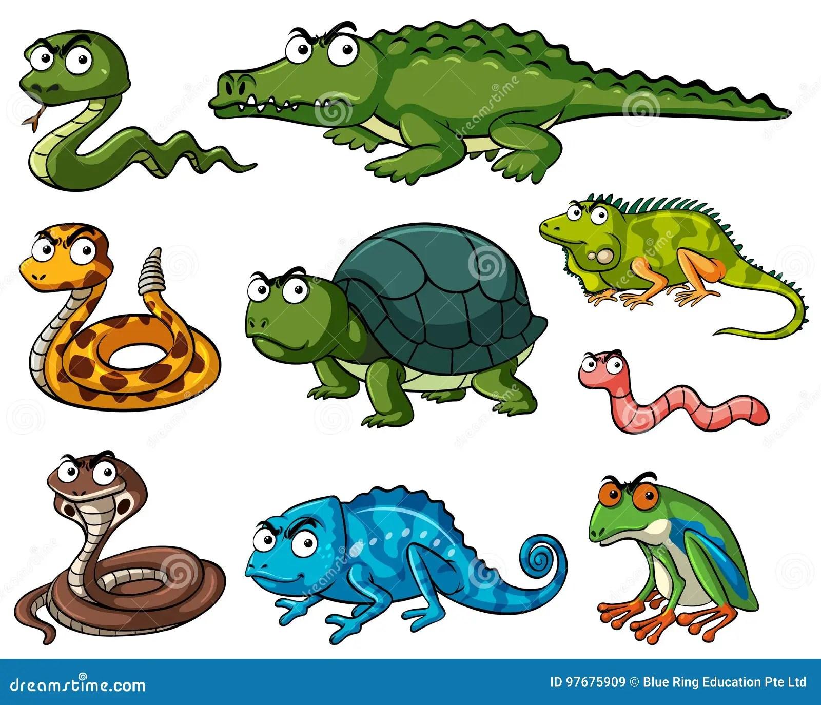 Amphibian Worksheet Information Chart