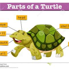 Turtle Shell Anatomy Diagram Voltage Free Contact Wiring Parts Of A Pictures To Pin On Pinterest Pinsdaddy