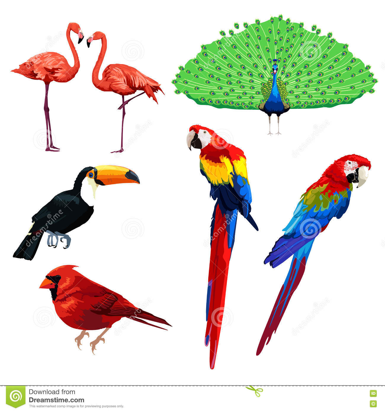 Different Type Of Birds Stock Vector Illustration Of