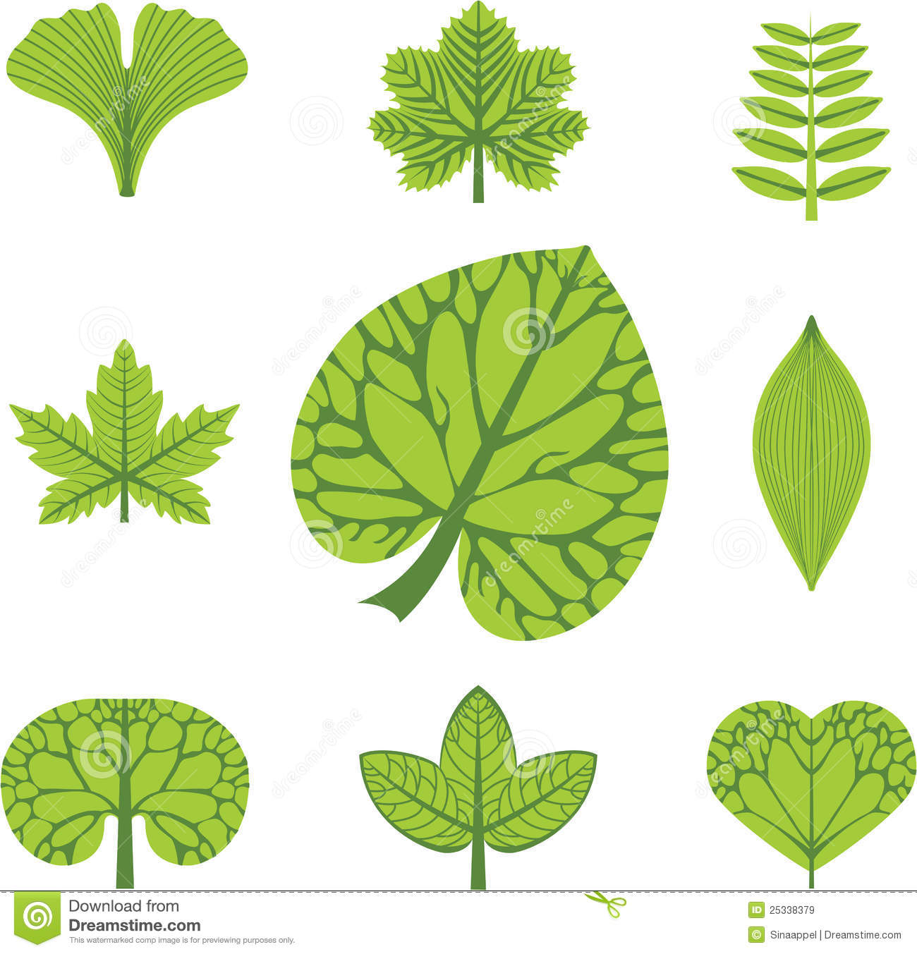 Different Types Of Leaves Stock Vector Illustration Of