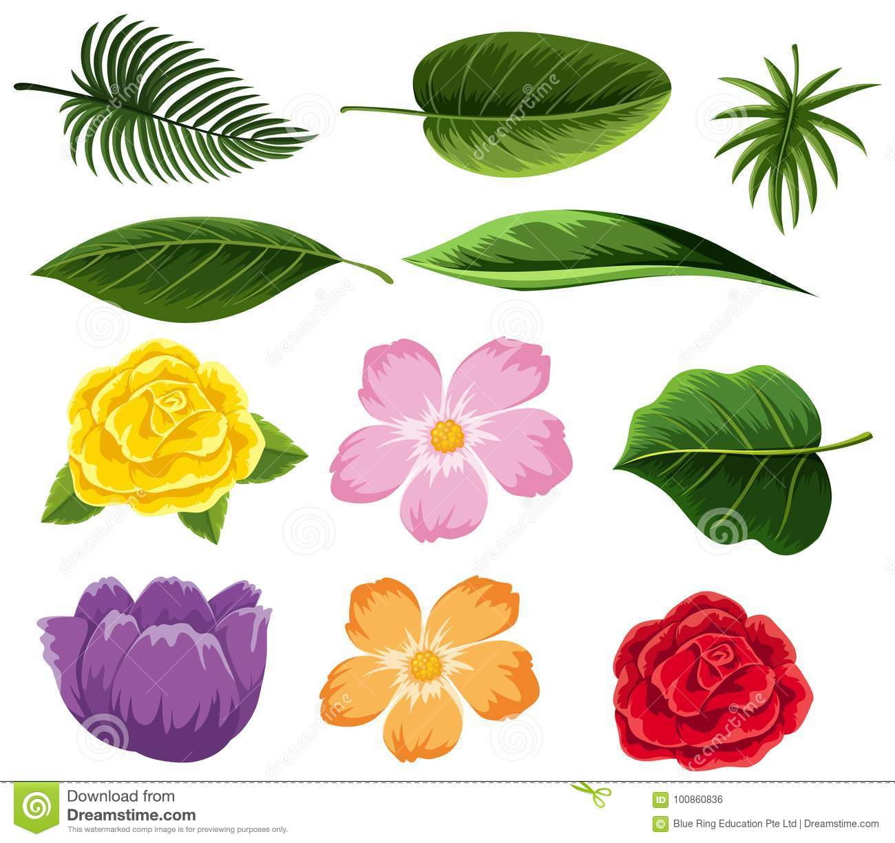 Different Types Of Leaves And Flowers Stock Vector