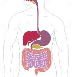 digestive system gastrointestinal tract diagram [ 992 x 1689 Pixel ]