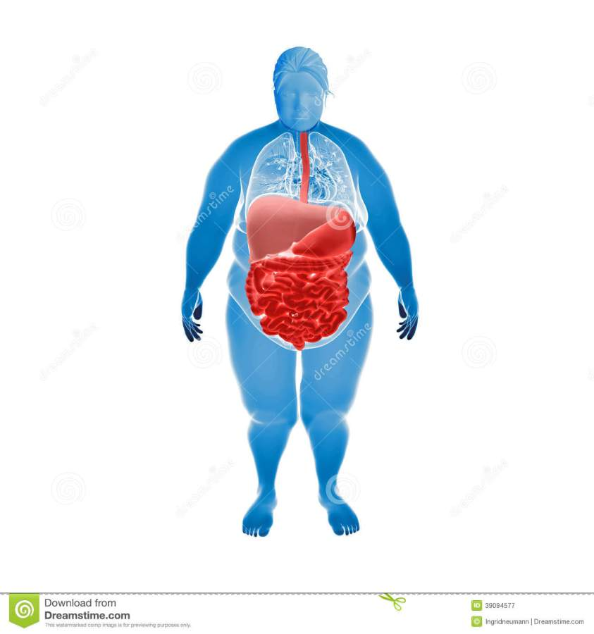 Digestive System Of Overweight Female Stock Illustration ...