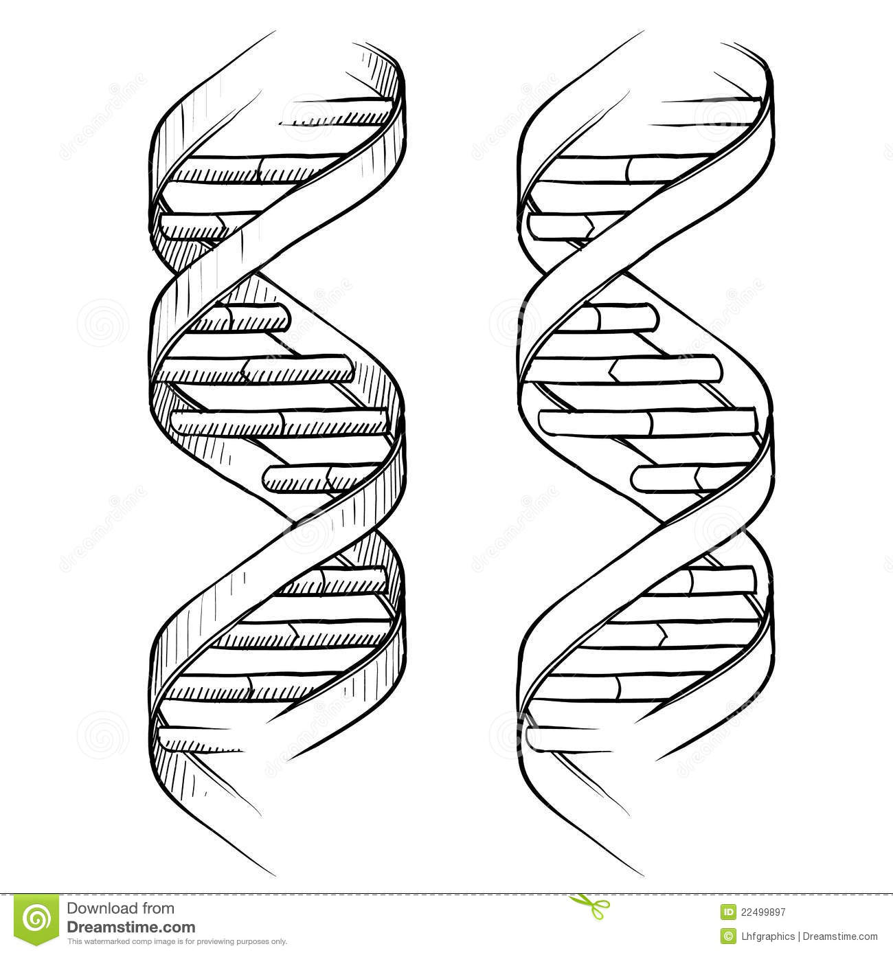 blank dna diagram 1991 jeep cherokee wiring double helix drawing stock vector illustration of