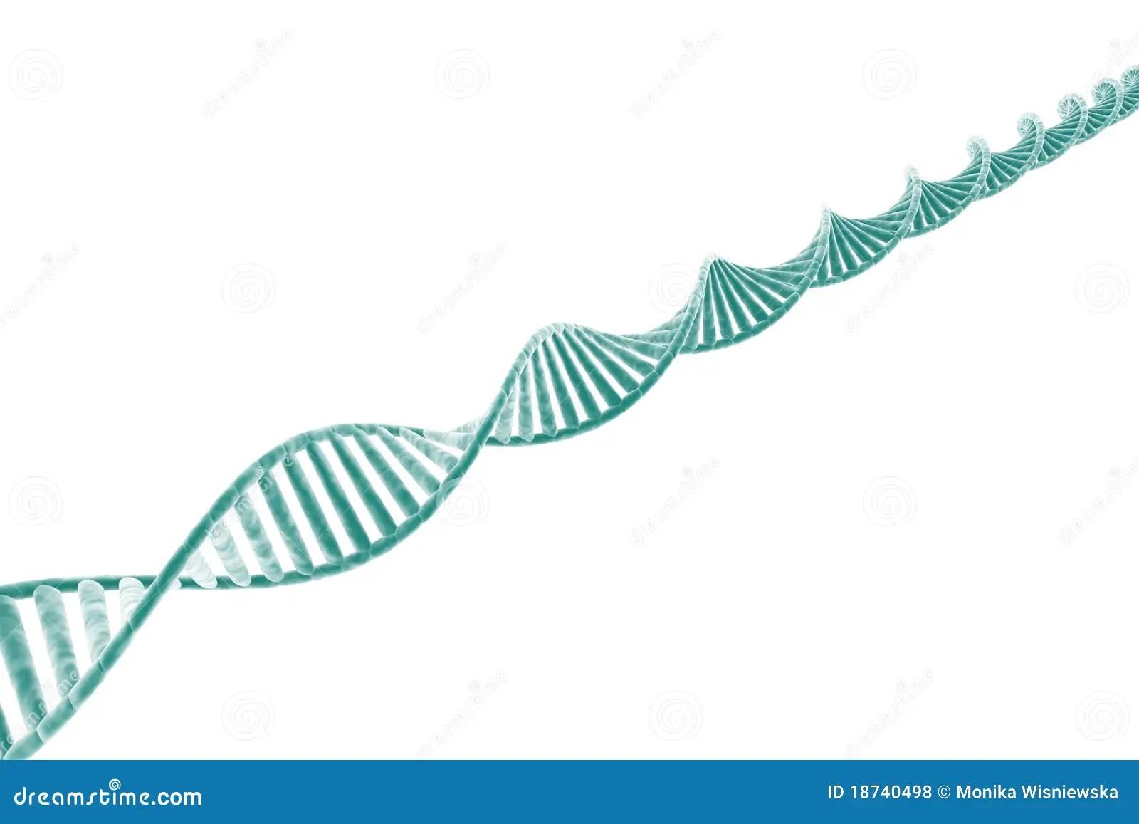 DNA Strand Royalty Free Stock Photos  Image 18740498