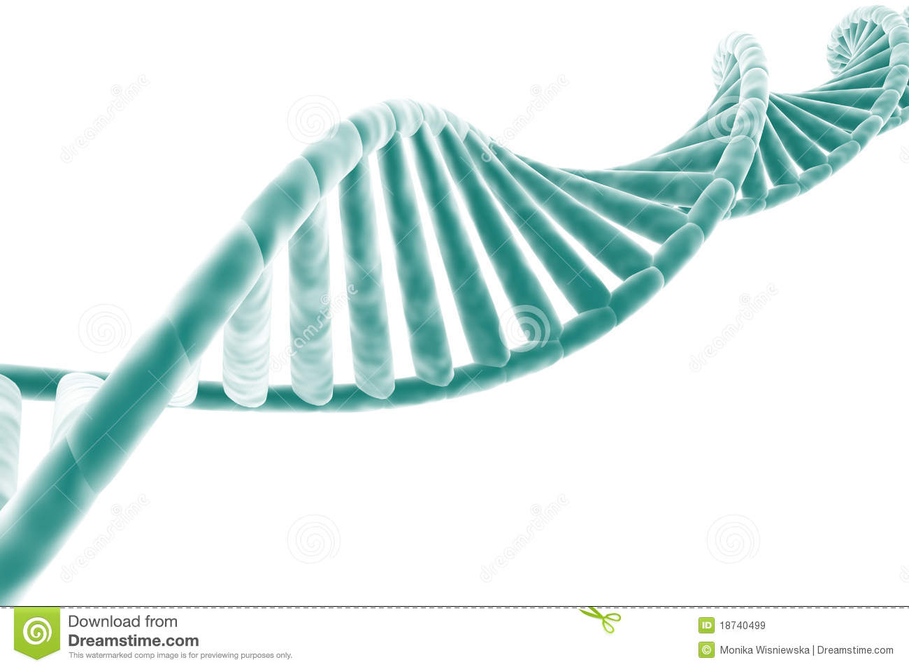 DNA Strand Royalty Free Stock Images  Image 18740499
