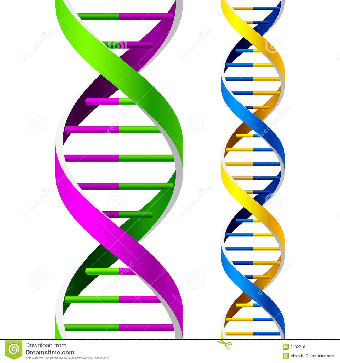 Dna Strands Stock Vector Illustration Of Healthy