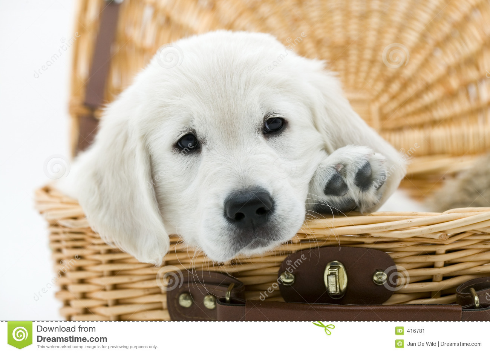 Dog In A Basket Stock Image Image 416781