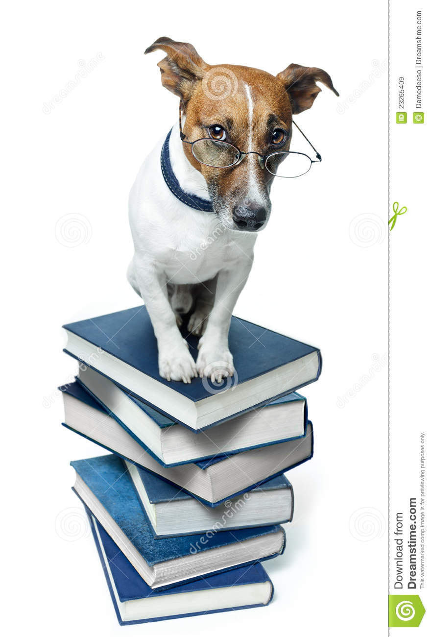 Dog On A Book Stack Royalty Free Stock Images  Image