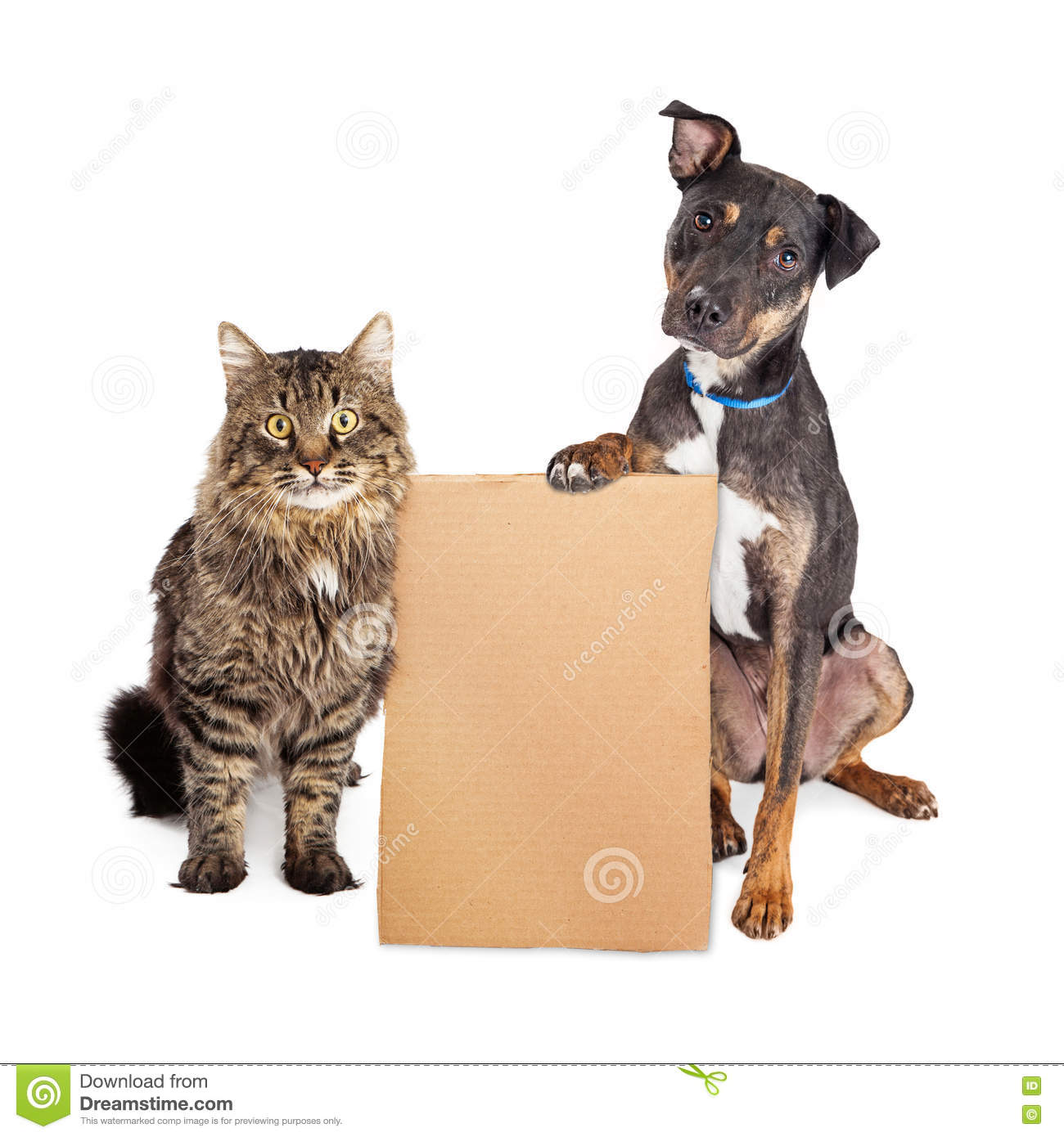 Dog And Cat With Blank Cardboard Sign Stock Photo