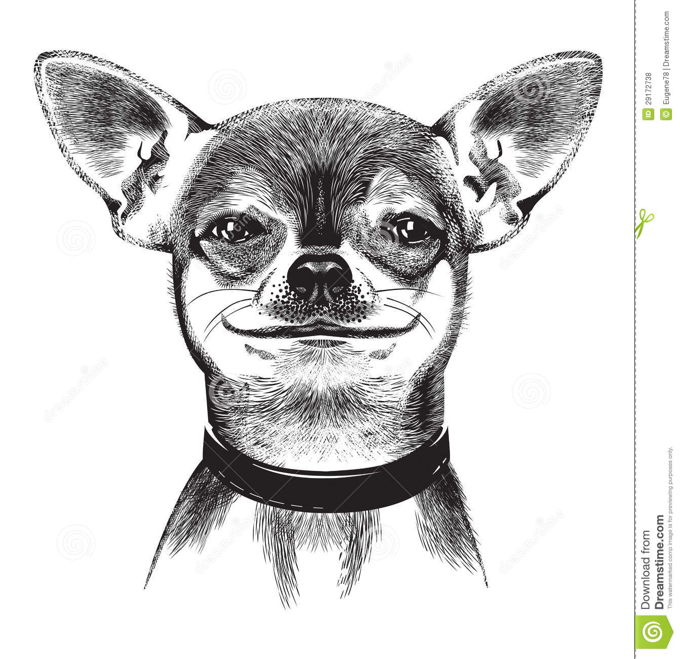 Dog Chihuahua Illustration Stock Vector