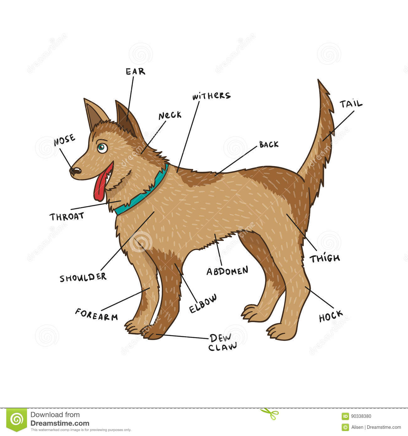 Dog External Anatomy Puppy Parts On English Stock Vector