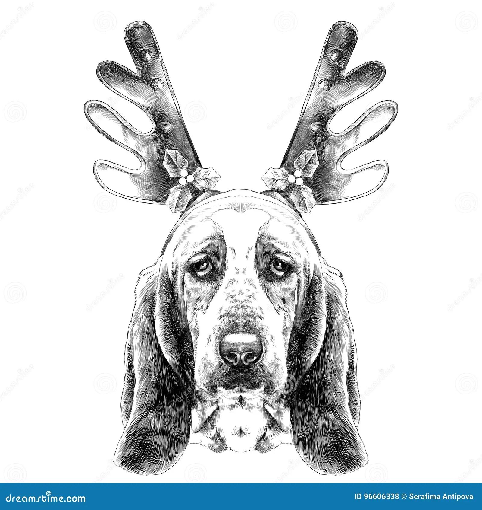 Dog Head Parade Basset Hound Sketch Vector Graphics Stock Vector