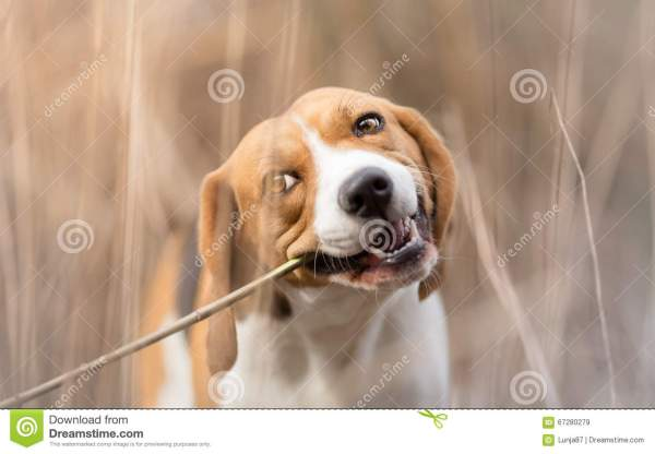 Dog Chewing Stick Stock #90393391