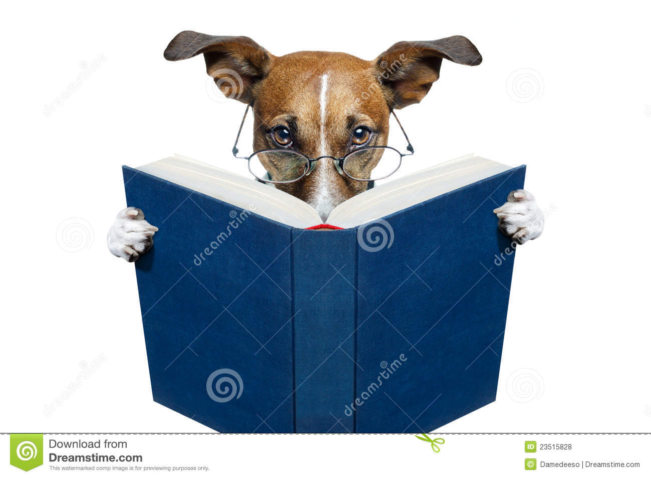 Dog Reading A Book Royalty Free Stock Photos  Image 23515828