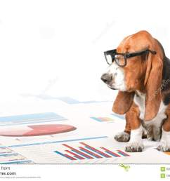 dog reading [ 1300 x 957 Pixel ]