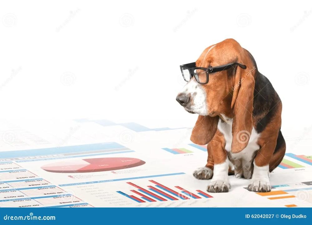 medium resolution of dog reading