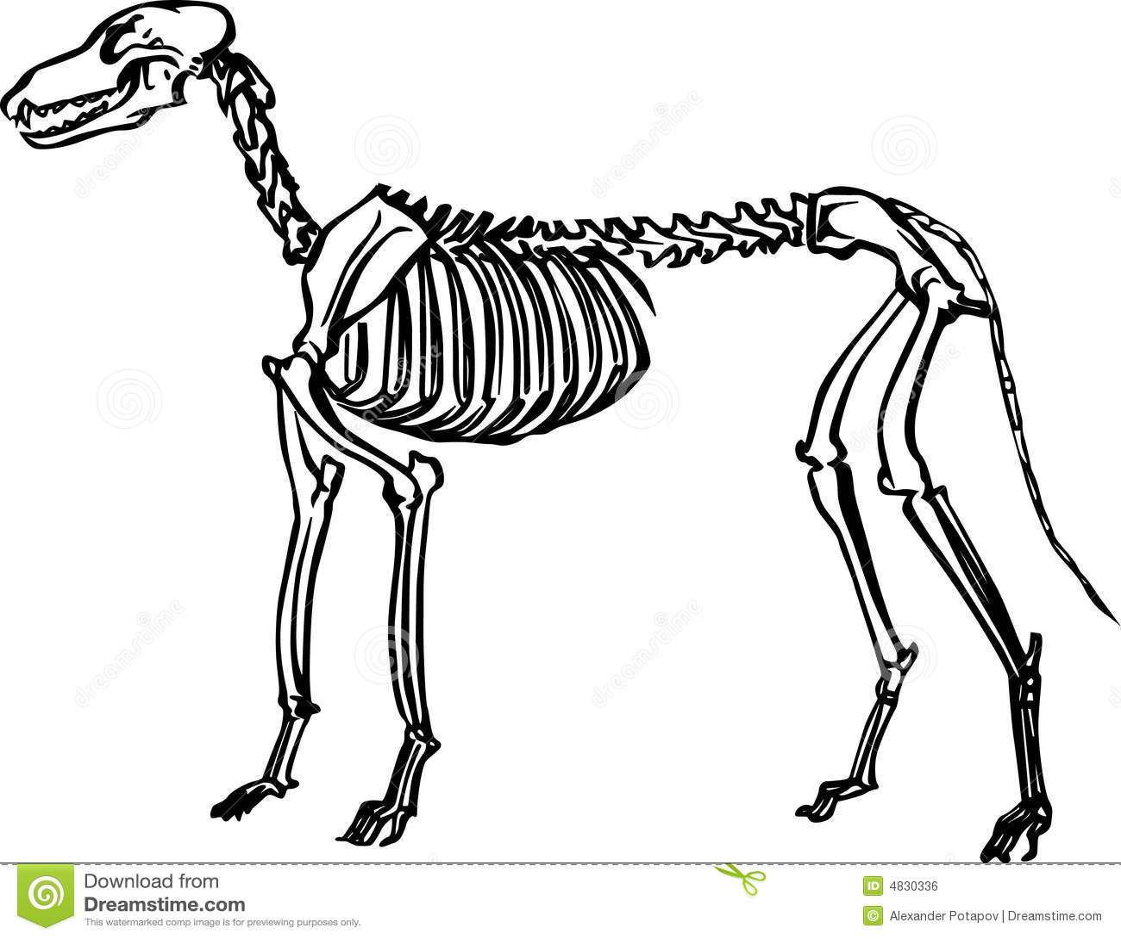 Dog Skeleton Stock Vector Illustration Of Line Education