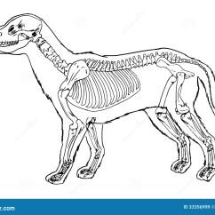 Dog Diagram Outline Large Wiring Dodge Charger 2014 Tail Lights Skeleton Stock Illustration Of