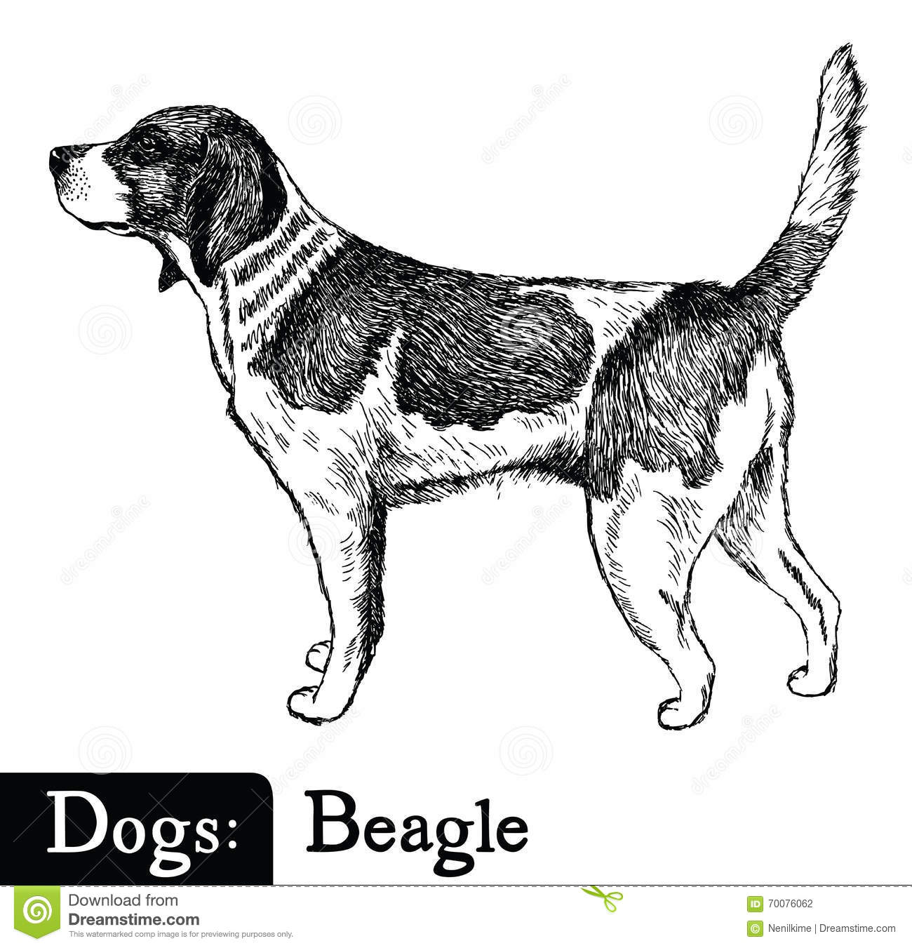 Dog Sketch Style Beagle Stock Vector Illustration Of Dogs