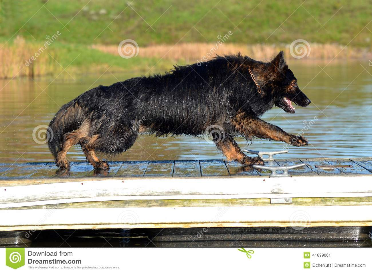 Dogs 305 Stock Photo