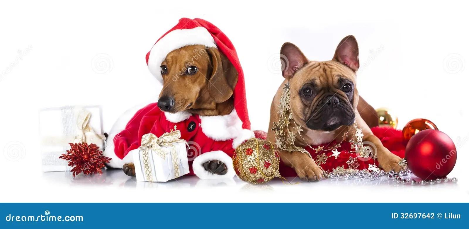 Red Animal Print Wallpaper Dogs A Santa Hat Stock Photo Image Of Friend Pedigree