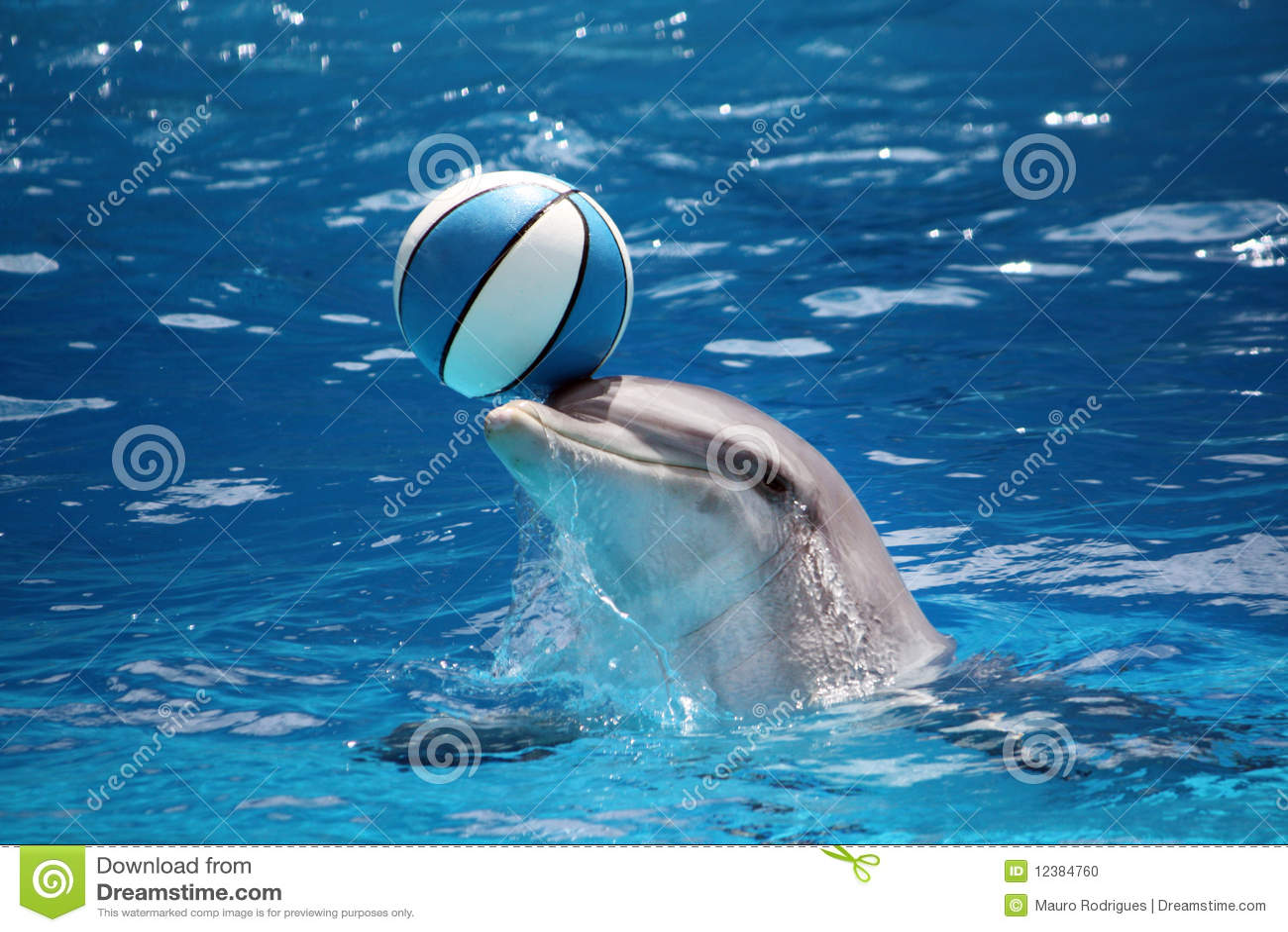 Animal Print Wallpaper Uk Dolphin With Ball Stock Photo Image 12384760