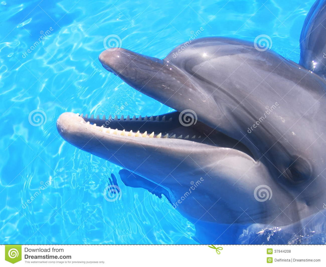 Cute Happy Faces Wallpaper Dolphin Picture Beautiful Dolphins Stock Photos Stock