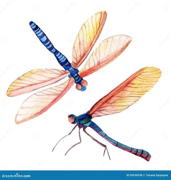 dragonfly stock illustration