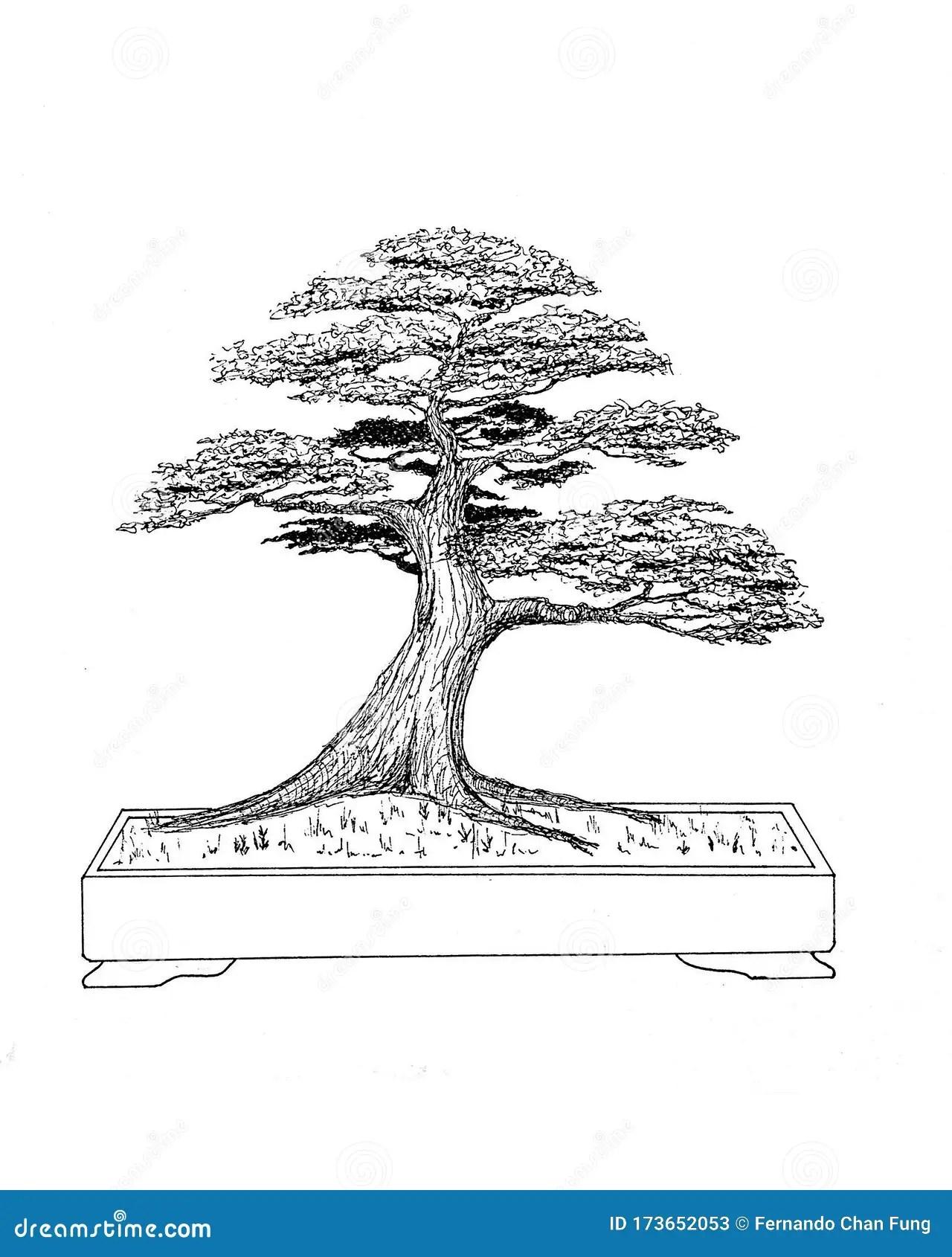 Bonsai Drawing : bonsai, drawing, Bonsai, Drawing, Arbol, Japan, China, Stock, Illustration, Tinta,, Fine:, 173652053