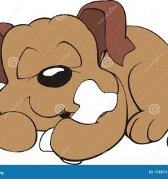 dog sleeping with a bone [ 1300 x 947 Pixel ]