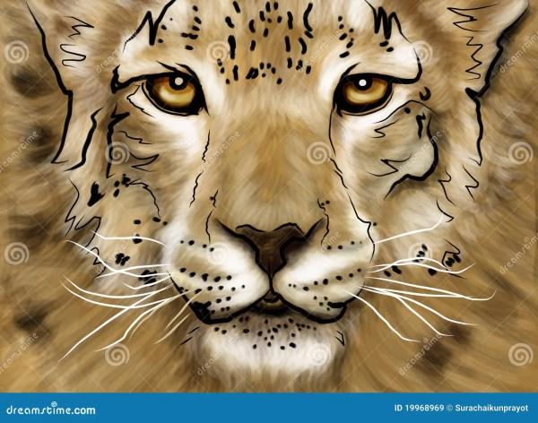 Drawing Puma Royalty Free Stock - 19968969