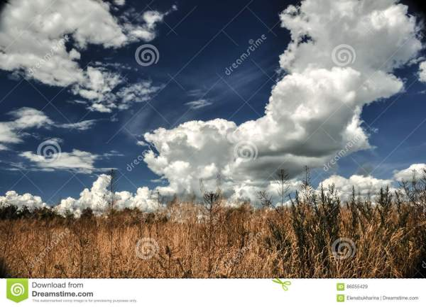 Blue Sky With Cumulus Clouds Stock #51536623