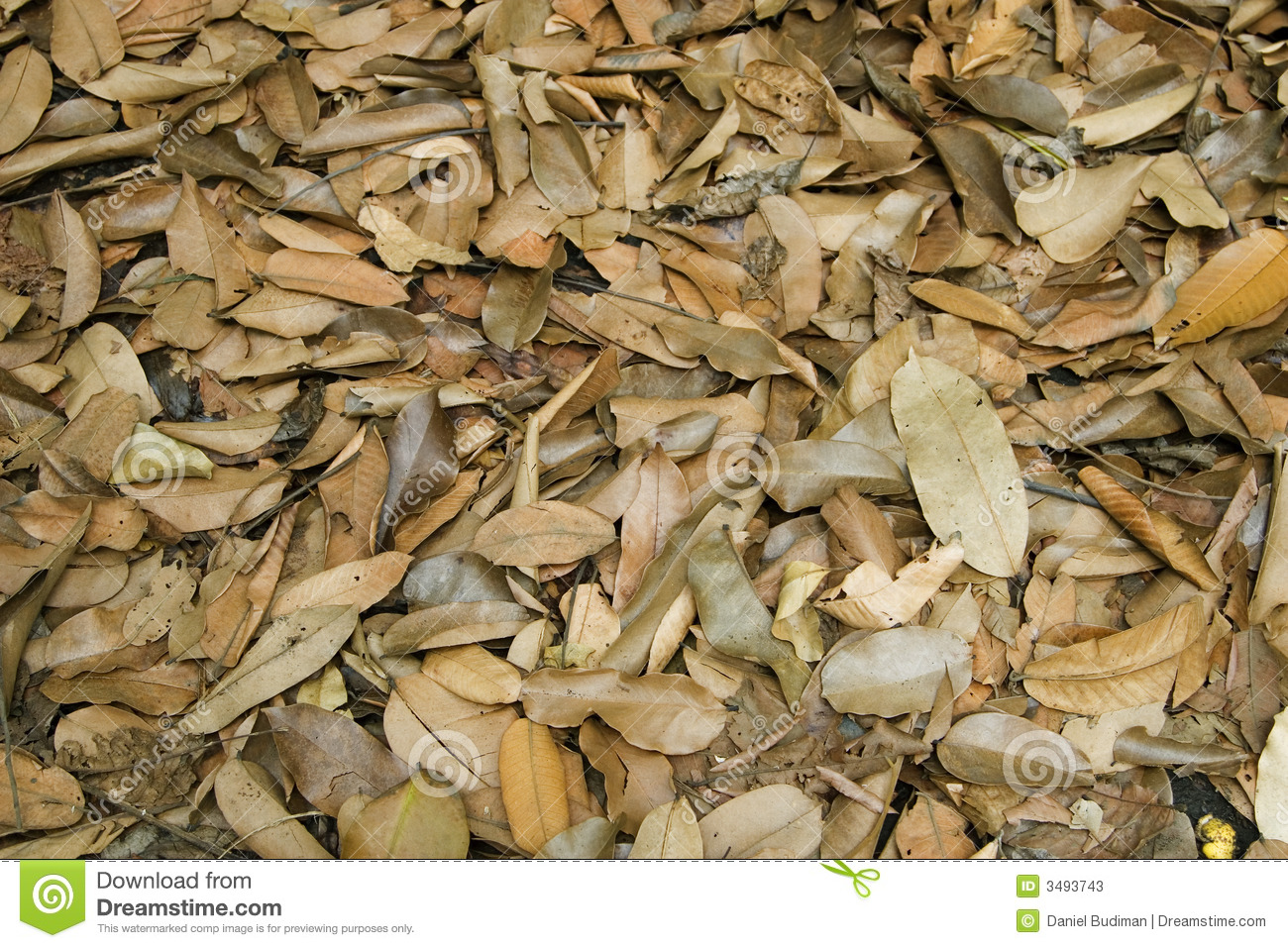 Dry Leaves In The Forest Stock Photos Image 3493743