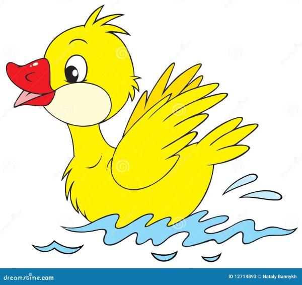 duckling stock