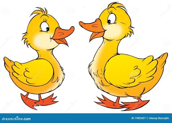 ducks stock illustration. illustration