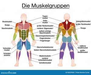 Duits De Tekst Mannelijk Lichaam Van Het Spierdiagram
