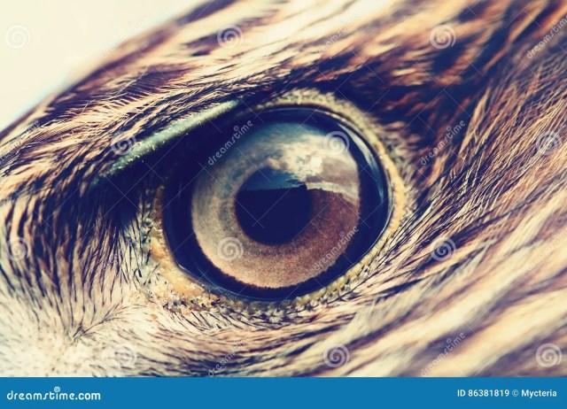 Eagle Eye Close Up Macro Photo Vintage Style Color Tone