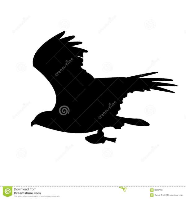EagleOsprey Silhouette Stock Photo Image 8070190