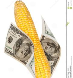 an ear of corn with the money [ 1006 x 1300 Pixel ]