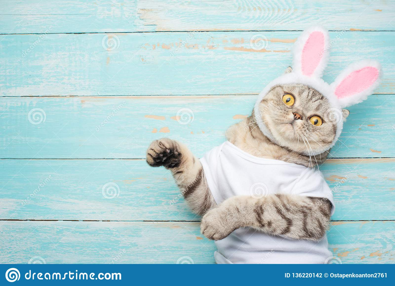 easter cat with rabbit