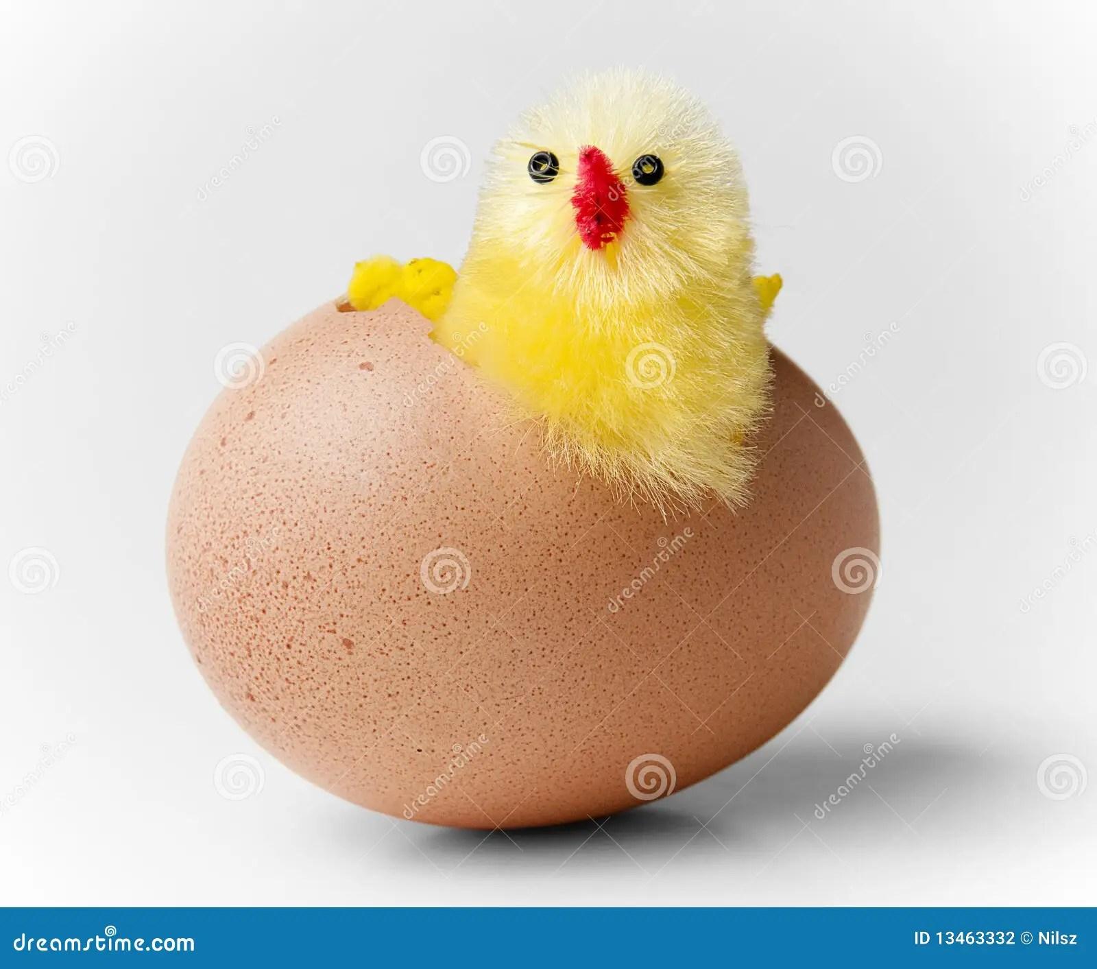 eye diagram of chicken siemens s120 wiring eggs hatching