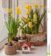 Easter Window Decoration Daffodils Stock Photo